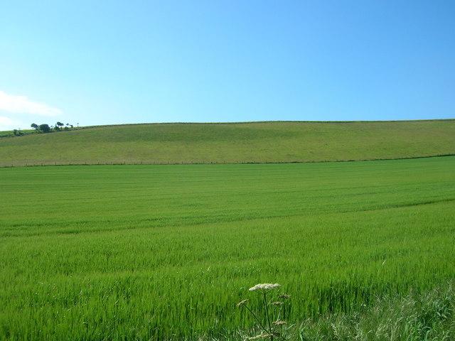 Farmland, West Flotmanby