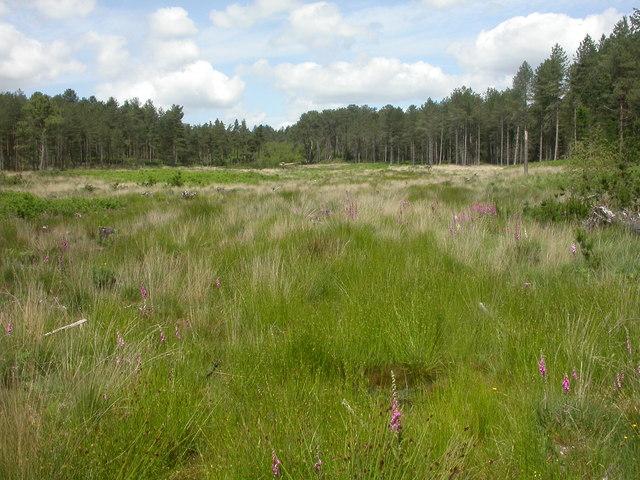 Boveridge Heath, bog