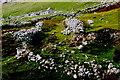 G5589 : Port - Derelict cottages on hillside by Joseph Mischyshyn