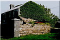 B8023 : Bunbeg - Derelict vine covered stable near harbour by Joseph Mischyshyn