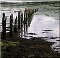 SN0107 : Seaweed and low tide at Garron Pill by John Duckfield