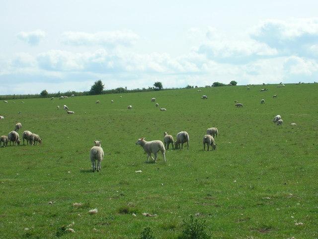 Farmland, Muston Cottage Farm