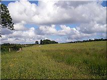 SN0210 : Wildflower meadow by John Duckfield