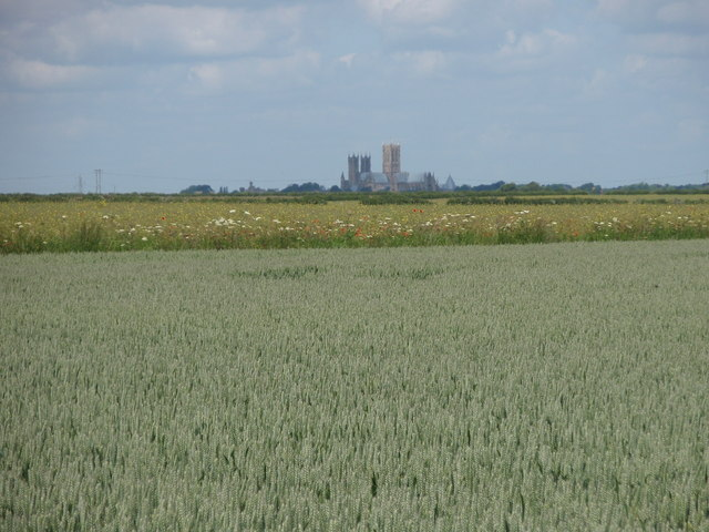 Lincoln Cathedral across the wheat fields