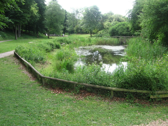 Pond at the Visitor Centre, Queen Elizabeth Country Park