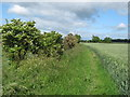 NZ2314 : Countryside Footpath by peter robinson