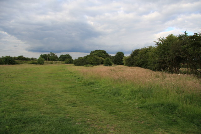 Field in Hutton Country Park