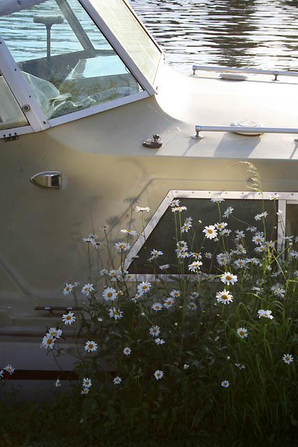 Boat and Daisies