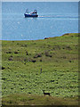 NG2352 : Red deer and fishing boat by Richard Dorrell