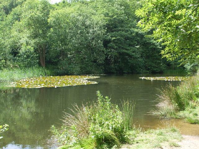 Fishing pond at Kelling Heath