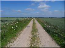 TA0114 : The Public Footpath to Barton Road by David Wright