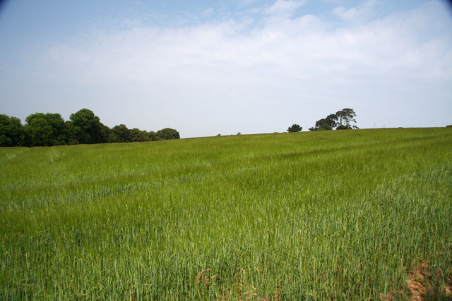 Field near Helford River