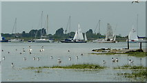 SU8003 : Bosham Harbour by Peter Trimming