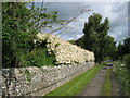 NZ2215 : Mill Lane bridleway High Coniscliffe by peter robinson