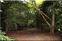 SP4802 : Footpath through the woods on Jarn Heath by Steve Daniels