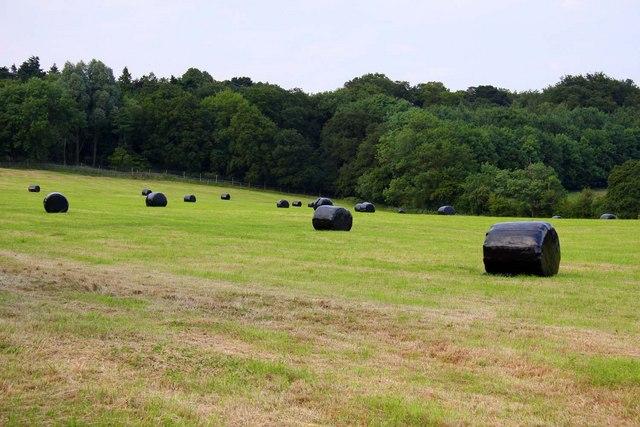 Bales of hay near Boars Hill