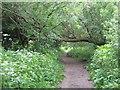 NZ2313 : Teesdale Way footpath by peter robinson
