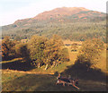 NM9628 : Rough pasture, Glen Lonan by Peter Bond