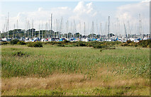 SZ3394 : Normandy Marsh reedbeds with yacht marina beyond by Andy F