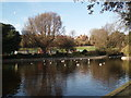 TQ3204 : Queens Park Pond looking west by Paul Gillett