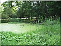 SP9713 : Woodland Pond near the Monument  Ashridge, in late June by Chris Reynolds