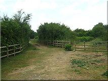TQ8068 : Footpath and Bridleway in Sharp's Green by David Anstiss