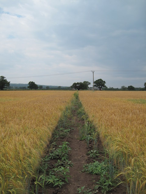 View of the Footpath to Broughton