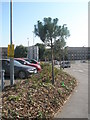 SU6505 : Supported trees by QA car park by Basher Eyre