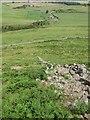 NT9229 : Ruined dyke, Yeavering Bell by Richard Webb