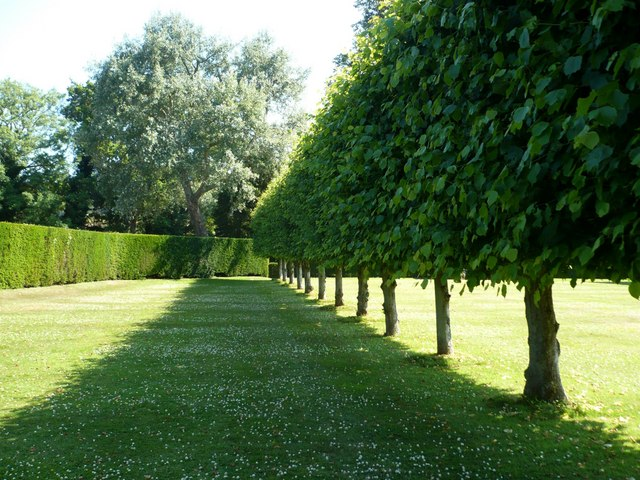 A row of pleached lime trees in the garden of Bateman's, Burwash