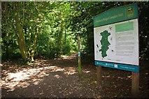TL7805 : Scrubs Wood by Glyn Baker
