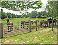 TM1897 : Horses at Redwings Horse Sanctuary by Evelyn Simak