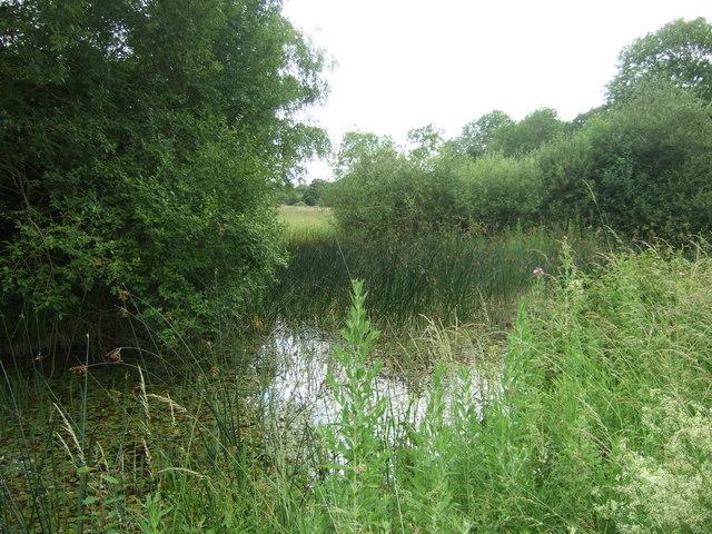Pond at Castor Hanglands