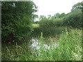 TF1101 : Pond at Castor Hanglands by geojoc
