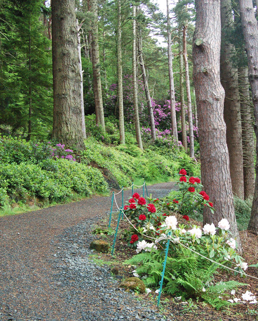 Flowers by the footpath, Cragside