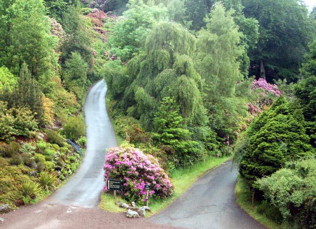 Tracks divide, Cragside