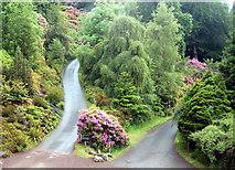 NU0702 : Tracks divide, Cragside by Andy F