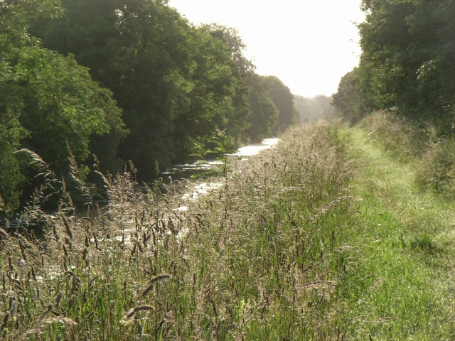 Royal Canal towpath gone to seed at Kilbrook, Co. Kildare