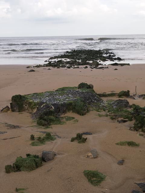 Rocks on Seaton Sands