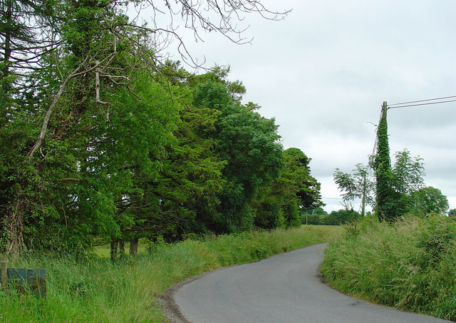 Trees on the road's edge: Derryhinch, Co. Meath