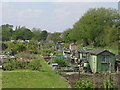 NZ2467 : Allotments on Little Moor (3) by Mike Quinn