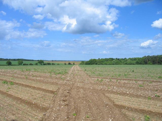 Footpath across arable land