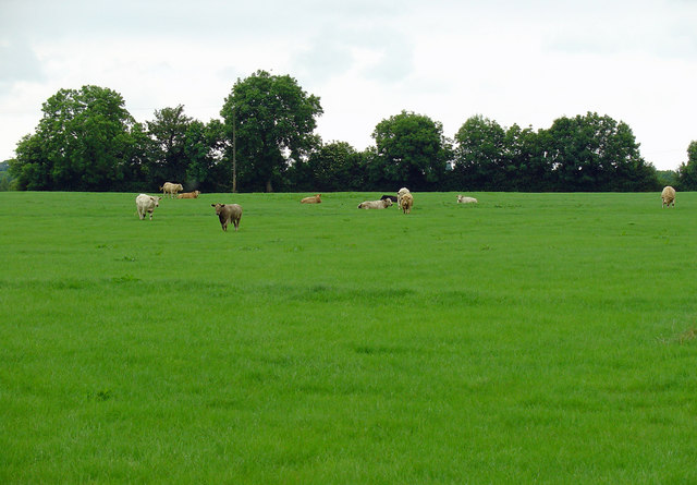 Pasture: Kilkieran, Co. Meath