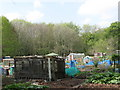 NZ2665 : Allotments in Jesmond Vale (2) by Mike Quinn