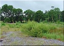 N4746 : Waste land near Mullingar, Co. Westmeath by Dylan Moore