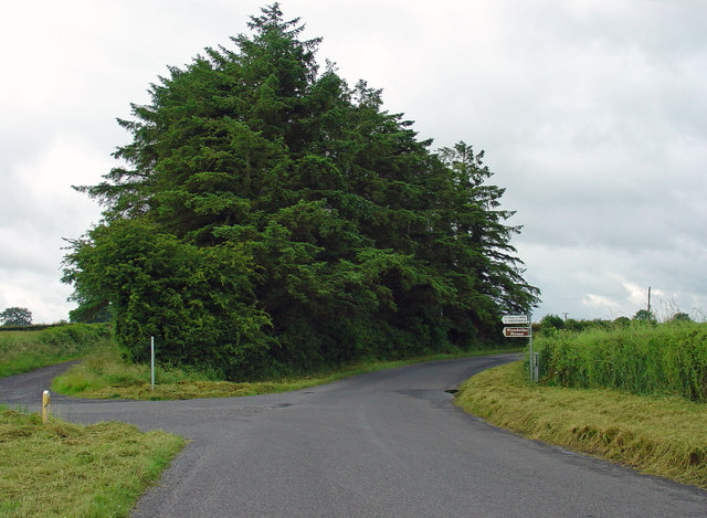 Trees on the corner: near Milltownpass, Co. Westmeath
