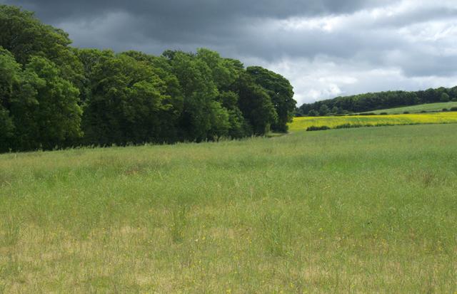 Crow Wood