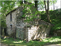 NY9038 : Derelict cottage alongside Middlehope Burn by Mike Quinn