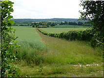 TQ5959 : Looking SSW  from the North Downs Way by Chris Gunns