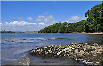 SX4460 : River Tamar toward Neal and Warren Points by Mick Lobb